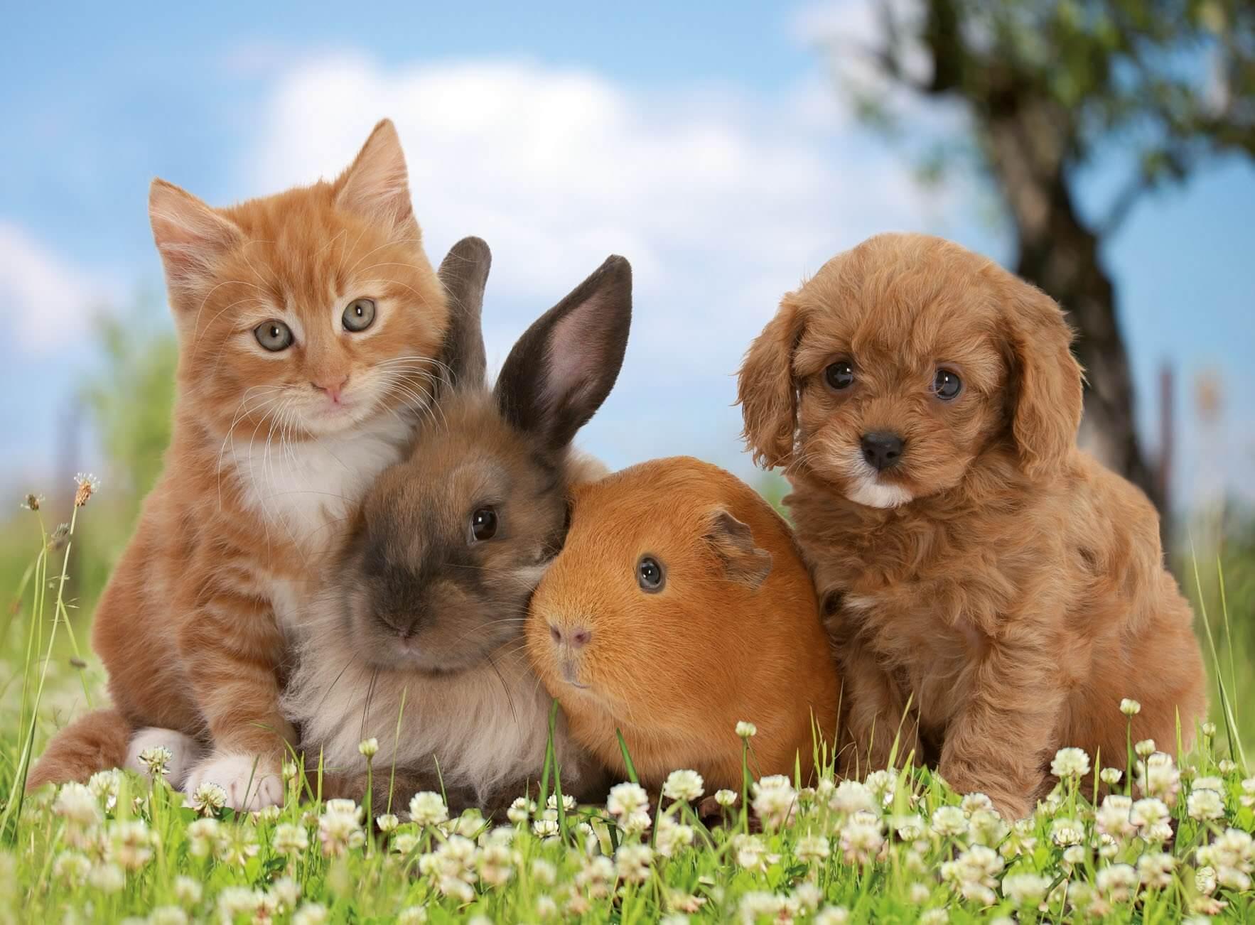 домашние животные, кошка, собака, кролик