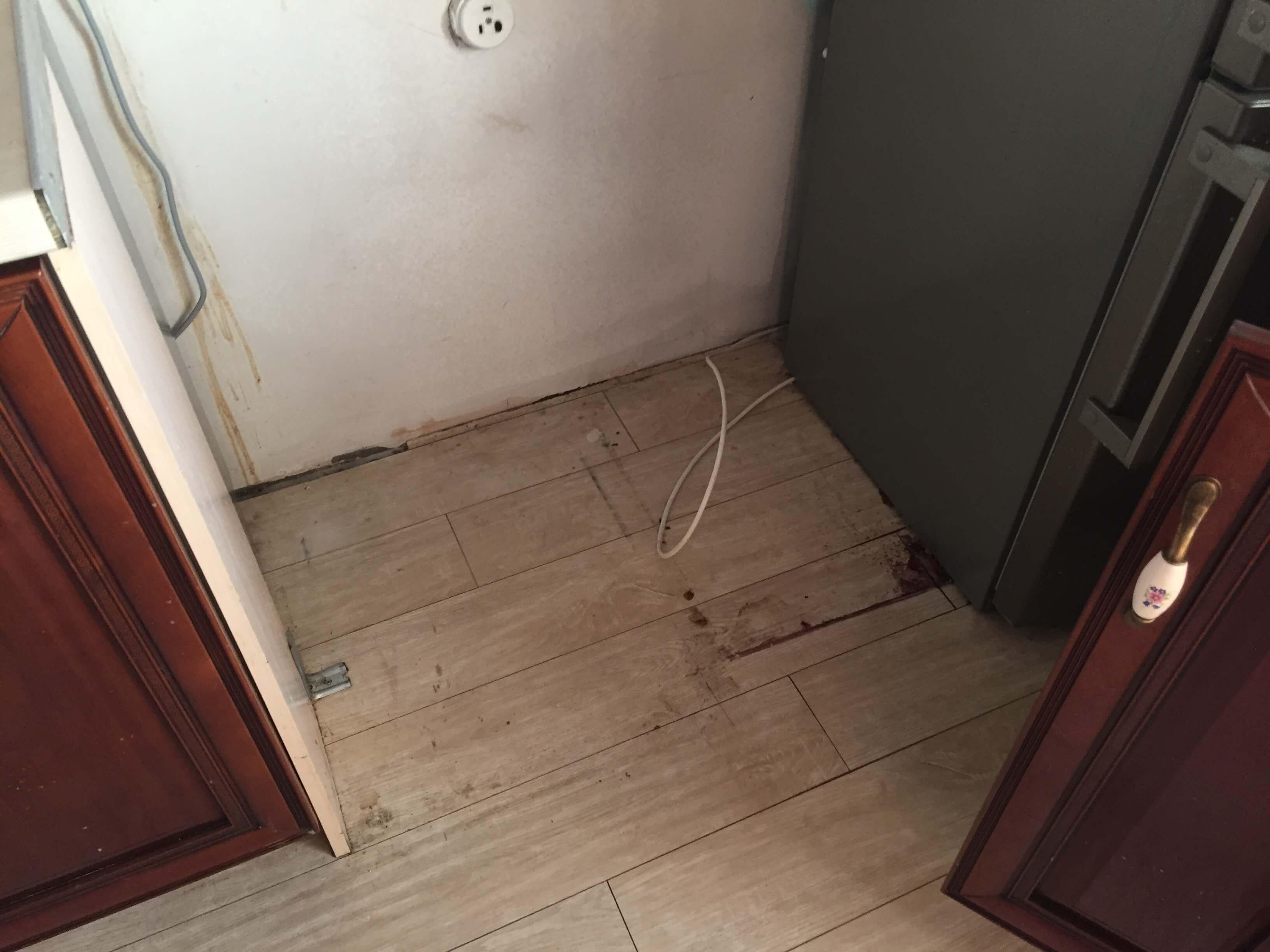 тараканы в ЖК Александр Невский