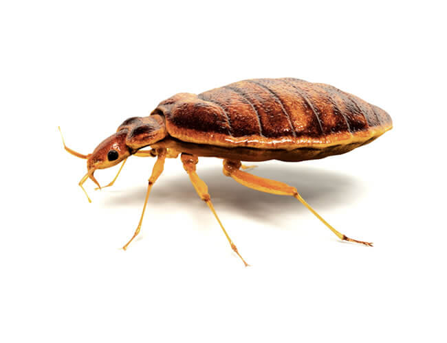 уничтожение паразитов в организме человека народными средствами