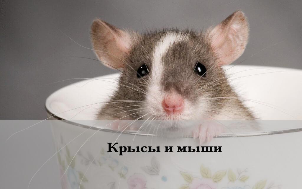 фотография мышки