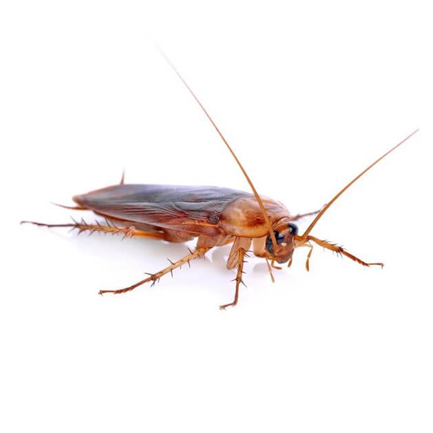 Уничтожение тараканов холодным туманом