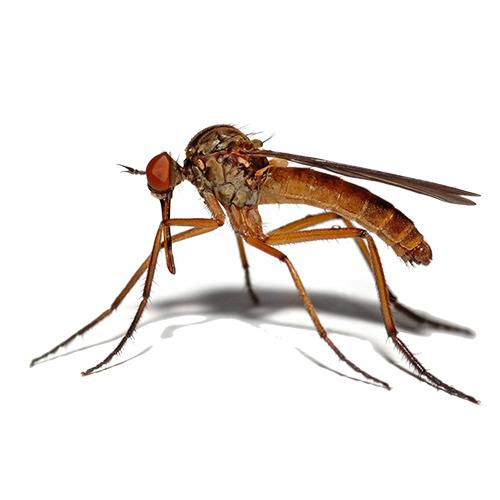 Уничтожение комаров на участке в СПБ и Ленобласти