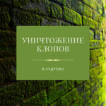 Уничтожение клопов в Кудрово