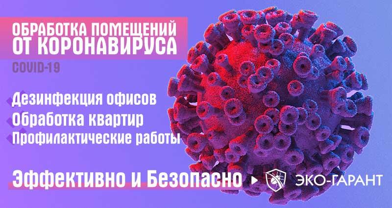 Дезинфекция от коронавируса
