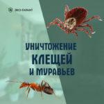 Уничтожение клещей и муравьёв на участках СПб и ЛО