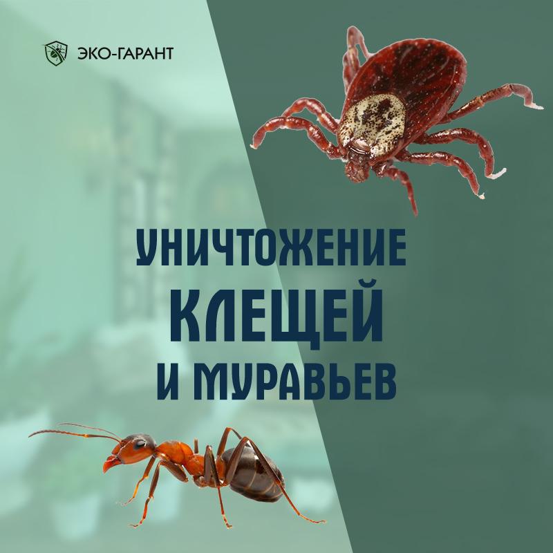 уничтожение клещей и муравьев