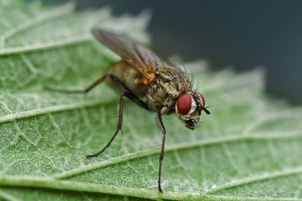 обработка помещений и участков от мух