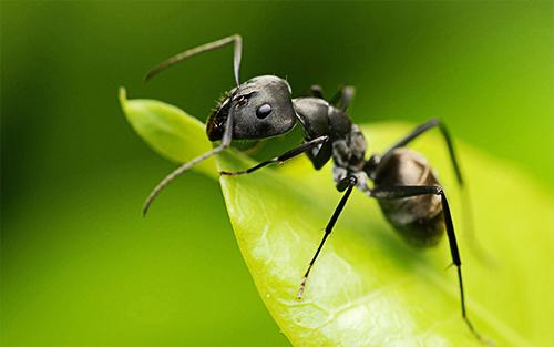 Обработка участка от муравьёв